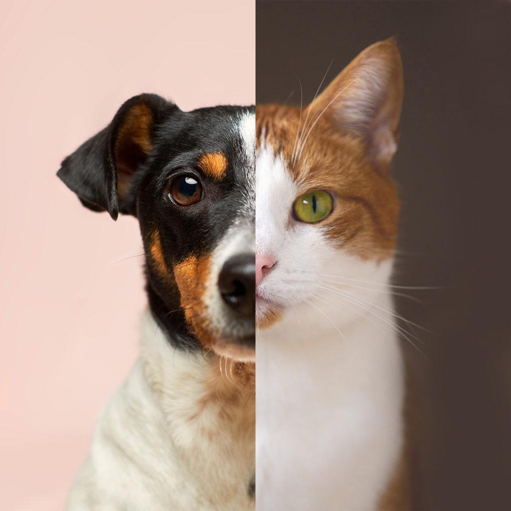 cane/gatto DOCILE/INDIPENDENTE