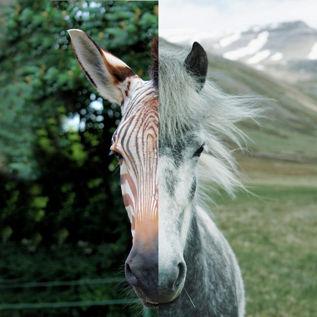 zebra/cavallo ORIGINALE/SEMPLICE