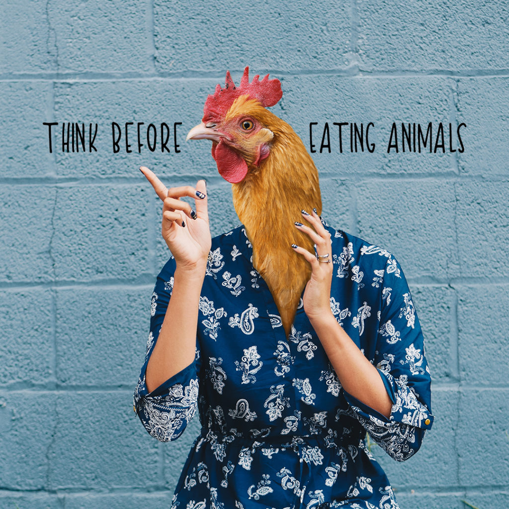 Chicken - Think before eating animals