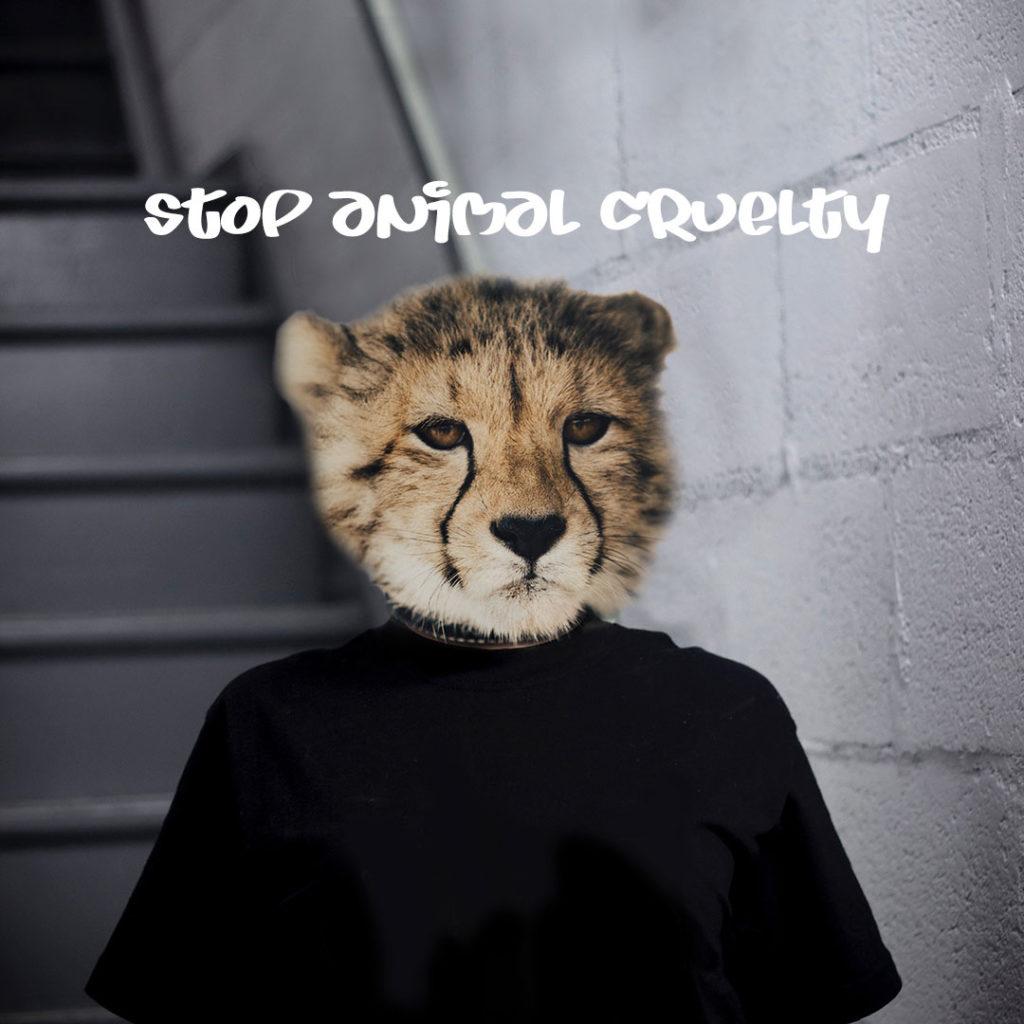 Cheetah - Stop animal cruelty
