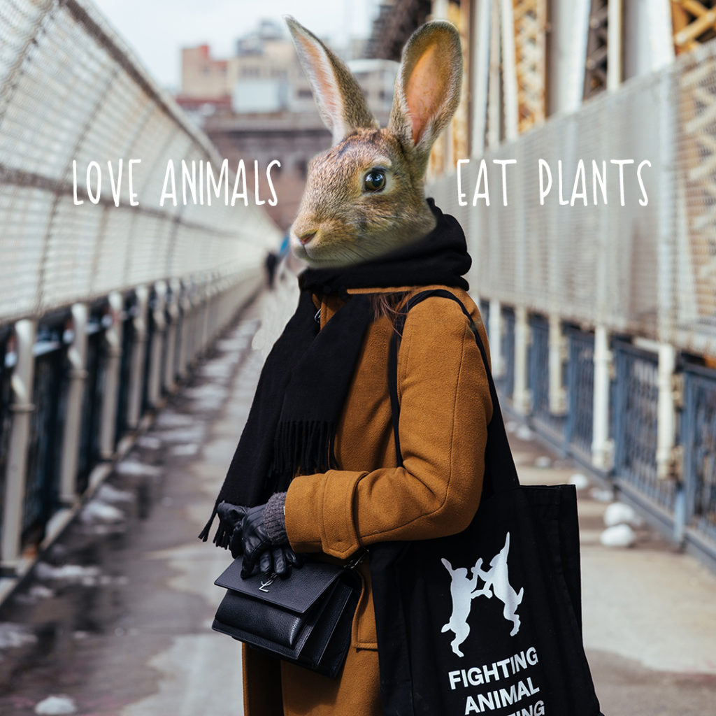 Rabbit - Love animals eat plants