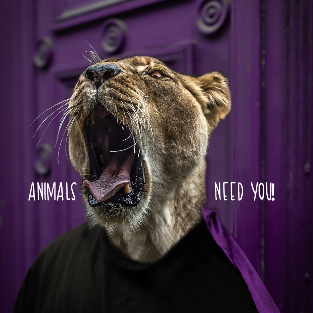 Lioness - Animals need you!