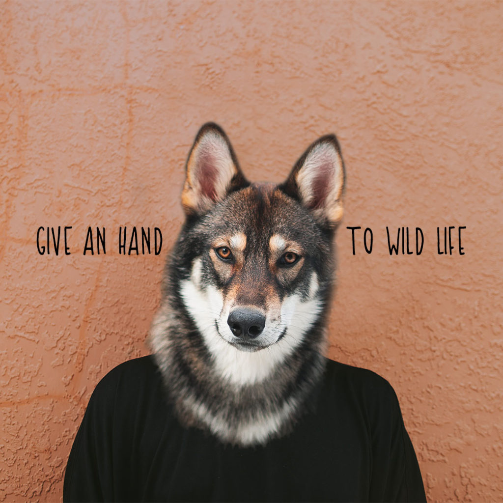 Wolf - Give an hand to wild life