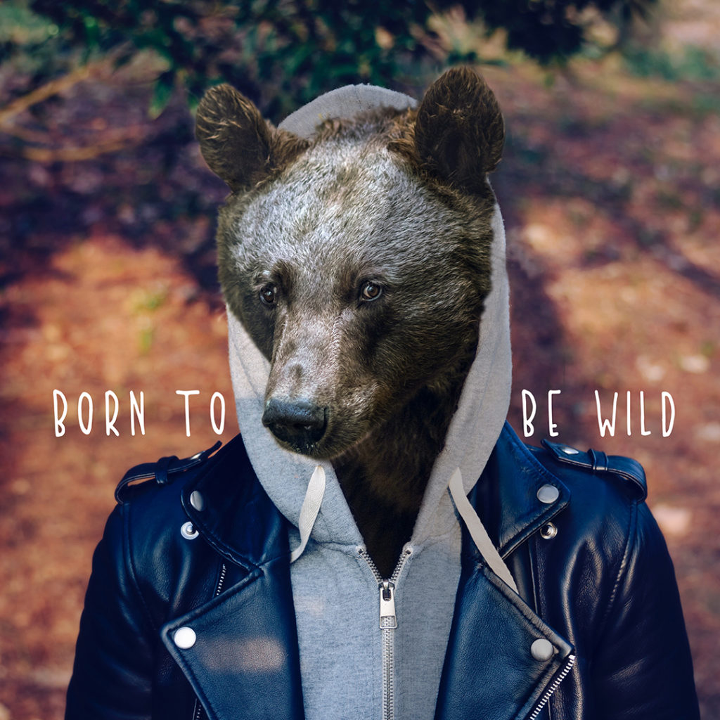 Bear - Born to be wild