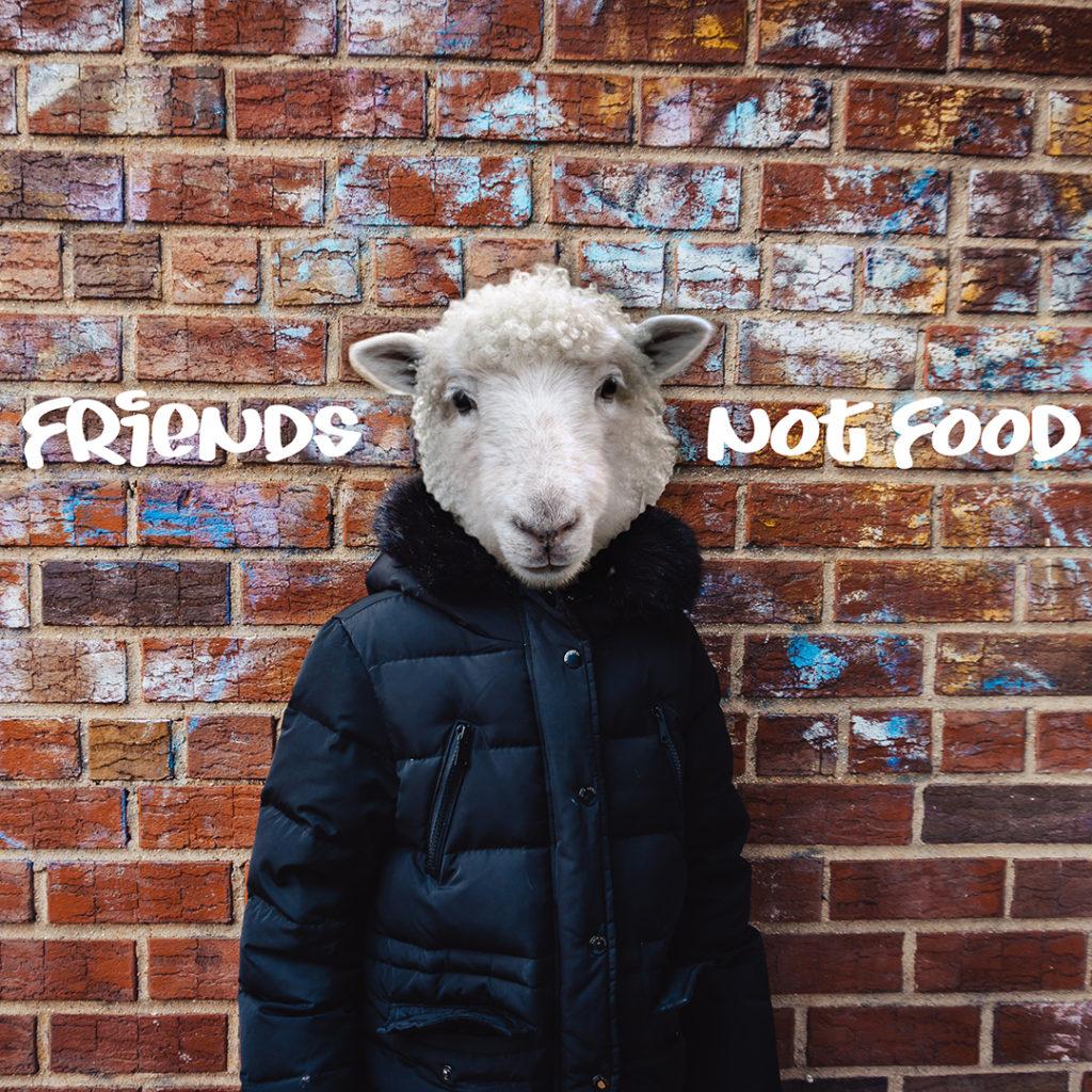 Sheep - Friends not food