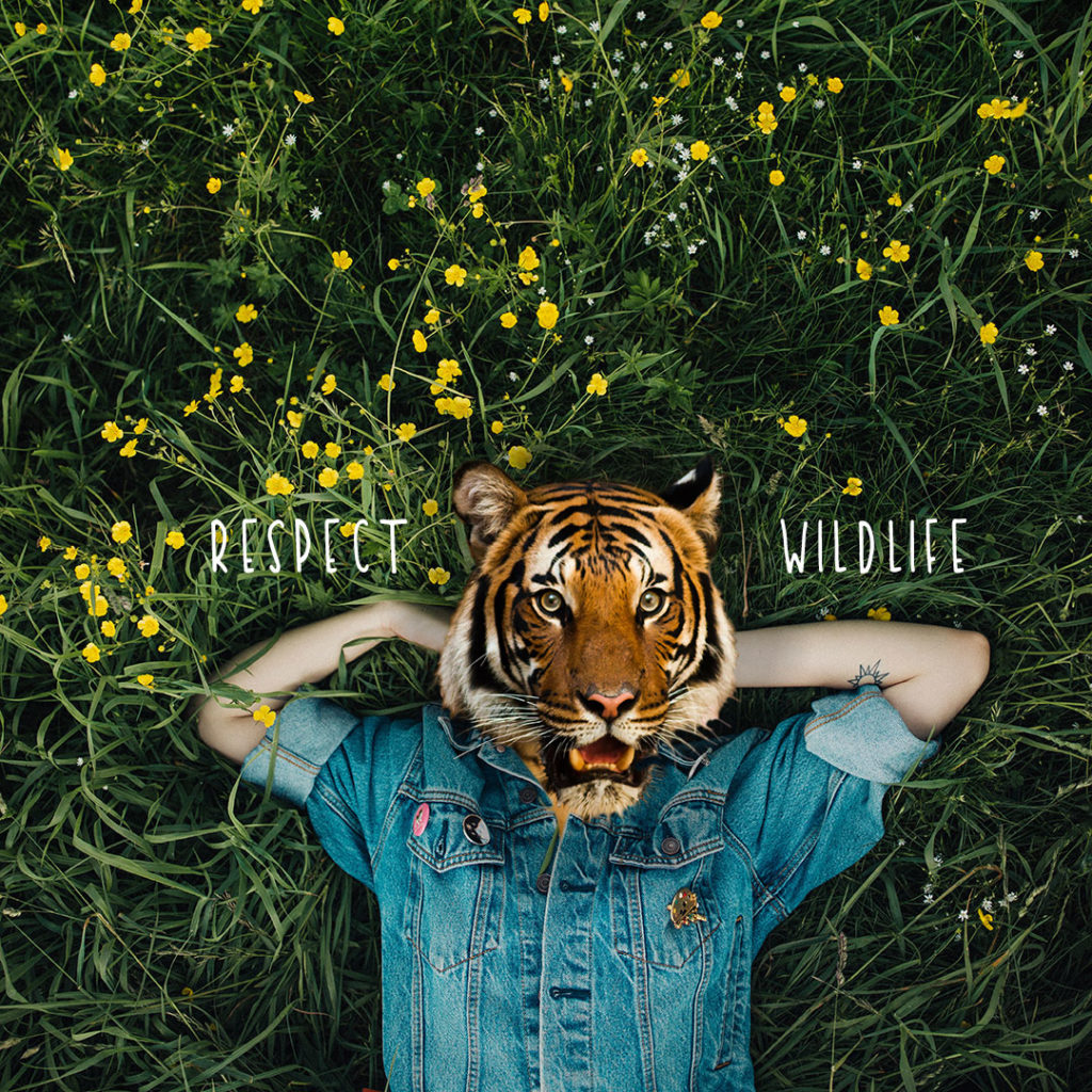Tiger - Respect wildlife